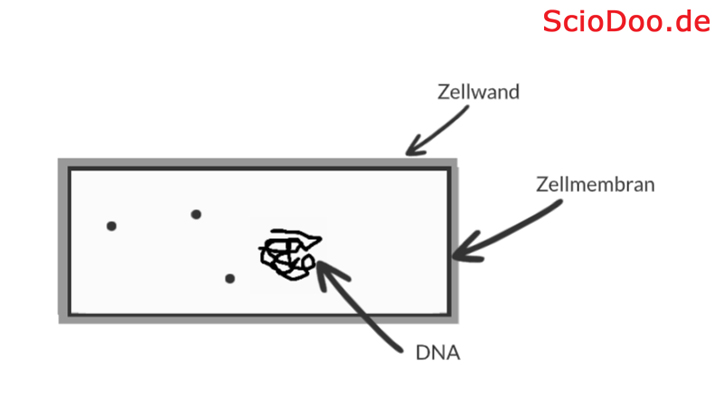 antibiotika bakterium zelle aufbau