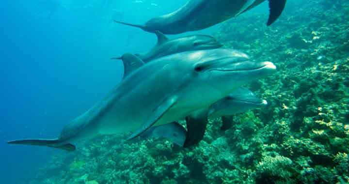 trinken delphine salzwasser