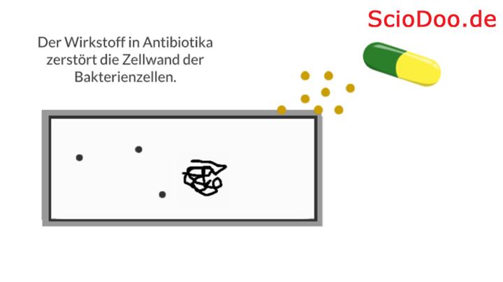 wie wirken antibiotika bakterien